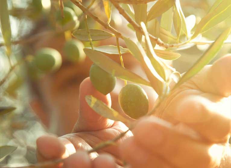 Aceite de oliva virgen extra, fuente de beneficios